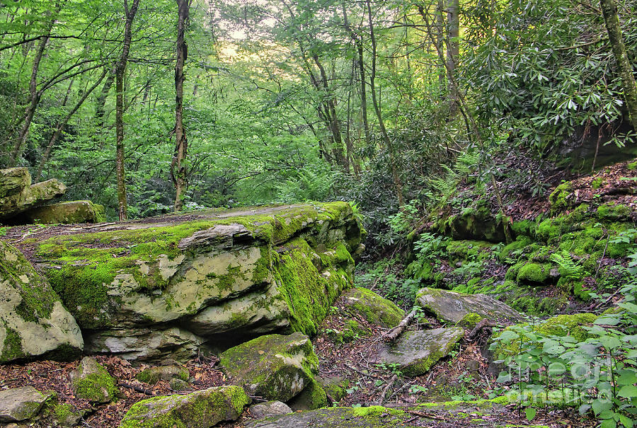 Nature Photograph - Profile Trail Rock by James Foshee