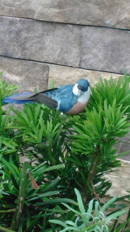 Prop Photograph - Prop Scrub Jay by Andrew Blitman