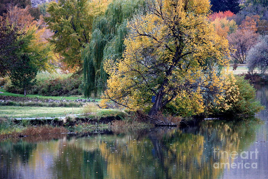 Fall Photograph - Prosser - Autumn Reflection With Geese by Carol Groenen