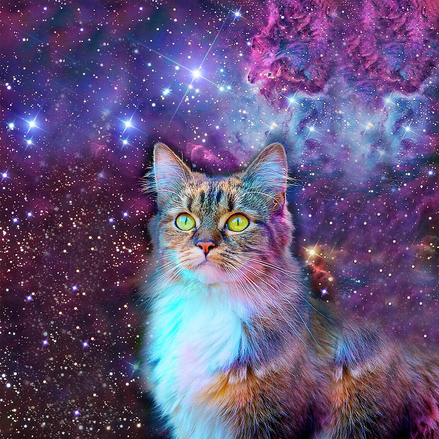 proud cat with space background digital art by johnnie art