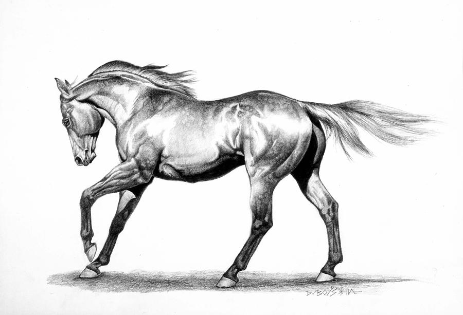 Thoroughbred Drawing - Proud by Howard Dubois