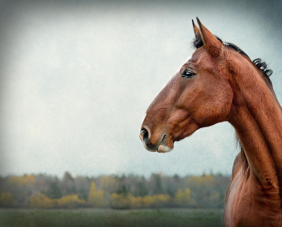 Horse Photograph - Proud by Maggie Terlecki