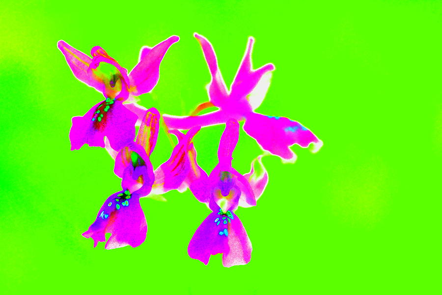 Green Provence Orchid Photograph