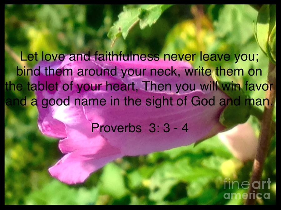 Proverbs Verse On Pink Hibiscus Flower Photograph By Debra Lynch