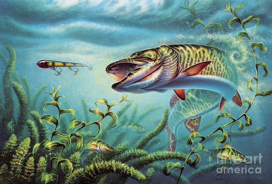 Muskie Painting - Provoked Musky by JQ Licensing