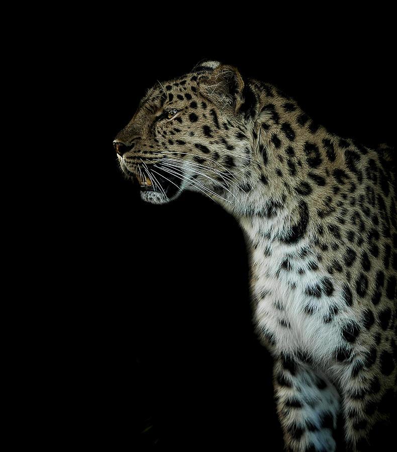 Prowl Photograph