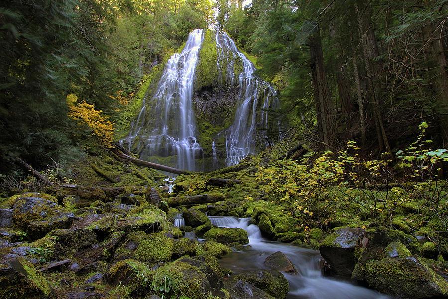 Proxy Falls Photograph - Proxy Falls by David Gn