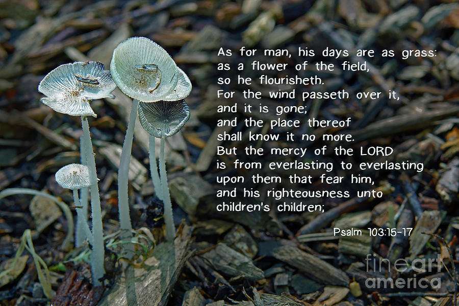 Bible Photograph - Psalm 103 Temporary And Eternal by Robin Clifton