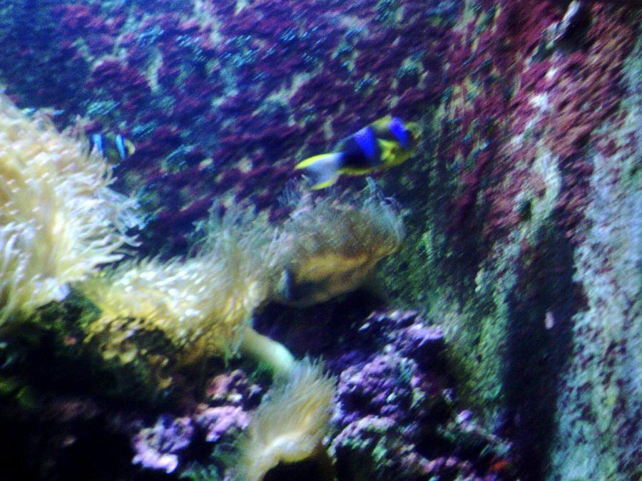 Fish Photograph - Psychadelic Aquarium by Alan Redhorse