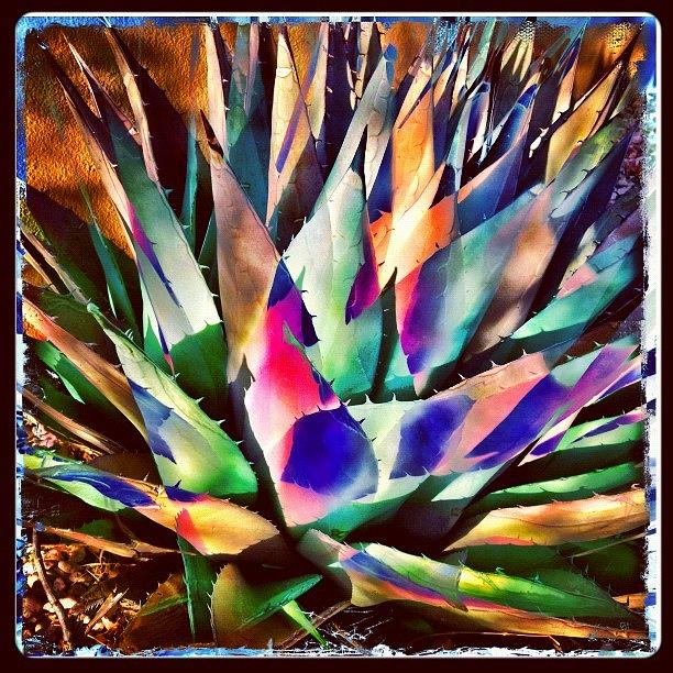 Instagram Photograph - Psychedelic Agave by Paul Cutright