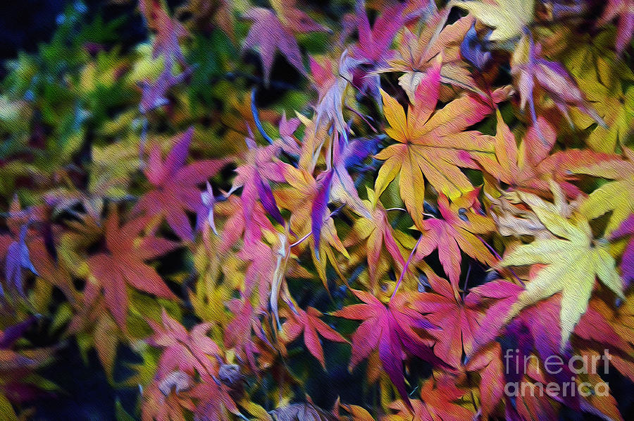 Digital Painting Photograph - Psychedelic Maple by Kaye Menner