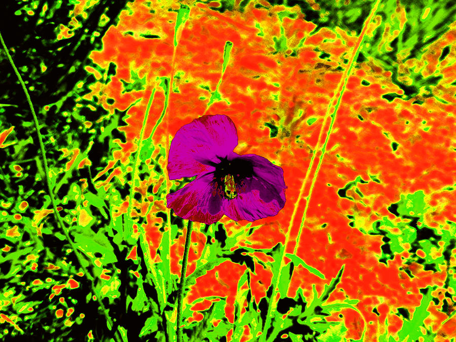 Psychedelic Photograph - Psychedelic Poppy 3 by Ingrid Dance
