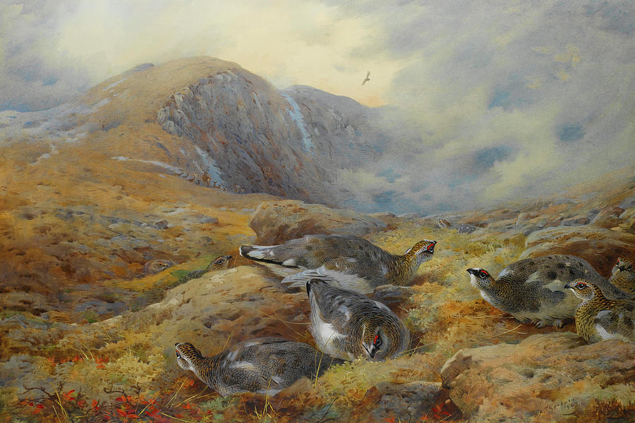 Ptarmigan Mixed Media - Ptarmigan Danger Aloft By Thorburn by Archibald Thorburn