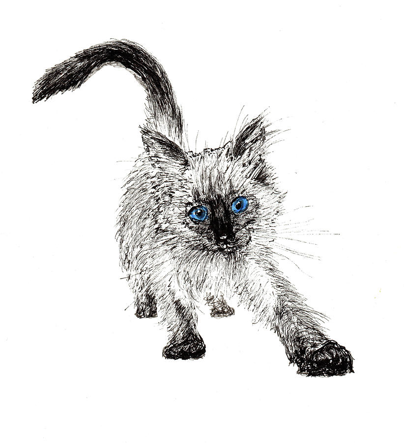 Cat Drawing - Pudsquiz Belina On The Prowl  by Vincent Alexander Booth