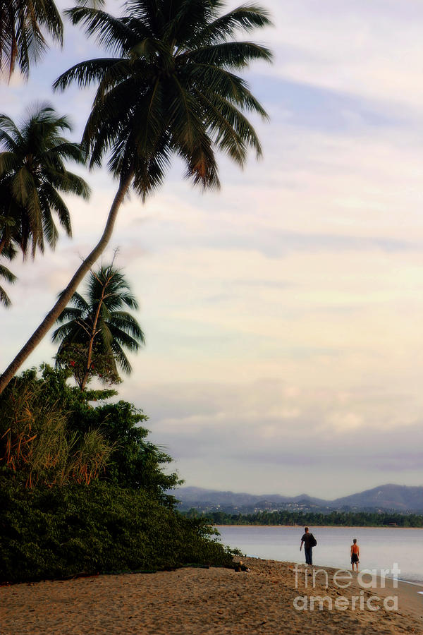 Palm Photograph - Puerto Rico Palms by Madeline Ellis