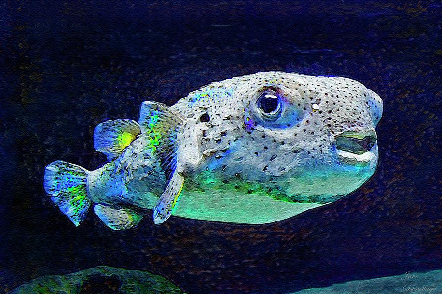 Puffer Fish Digital Art - Puffer Fish by Jane Schnetlage