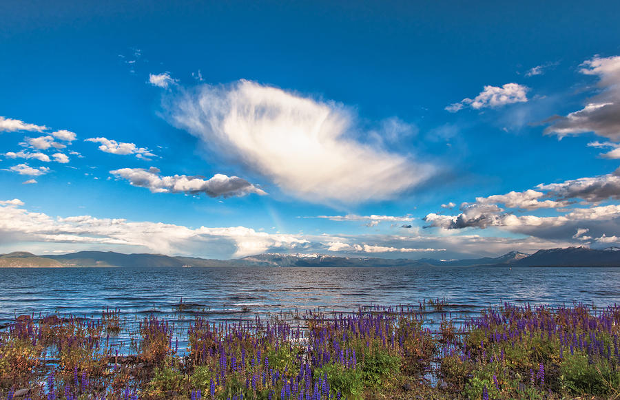 Puffy Spring Clouds, Miniature Rainbow Over Lake Tahoe Reflection And Lupine Shoreline Photograph