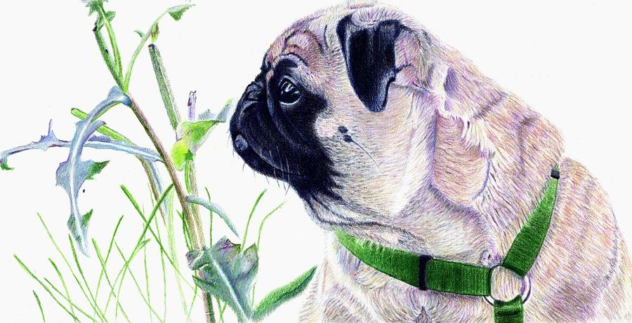 Pug Painting - Pug And Nature by Patricia Barmatz