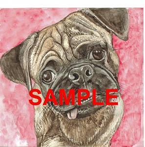Pug Painting - Pug by Billie Riholm