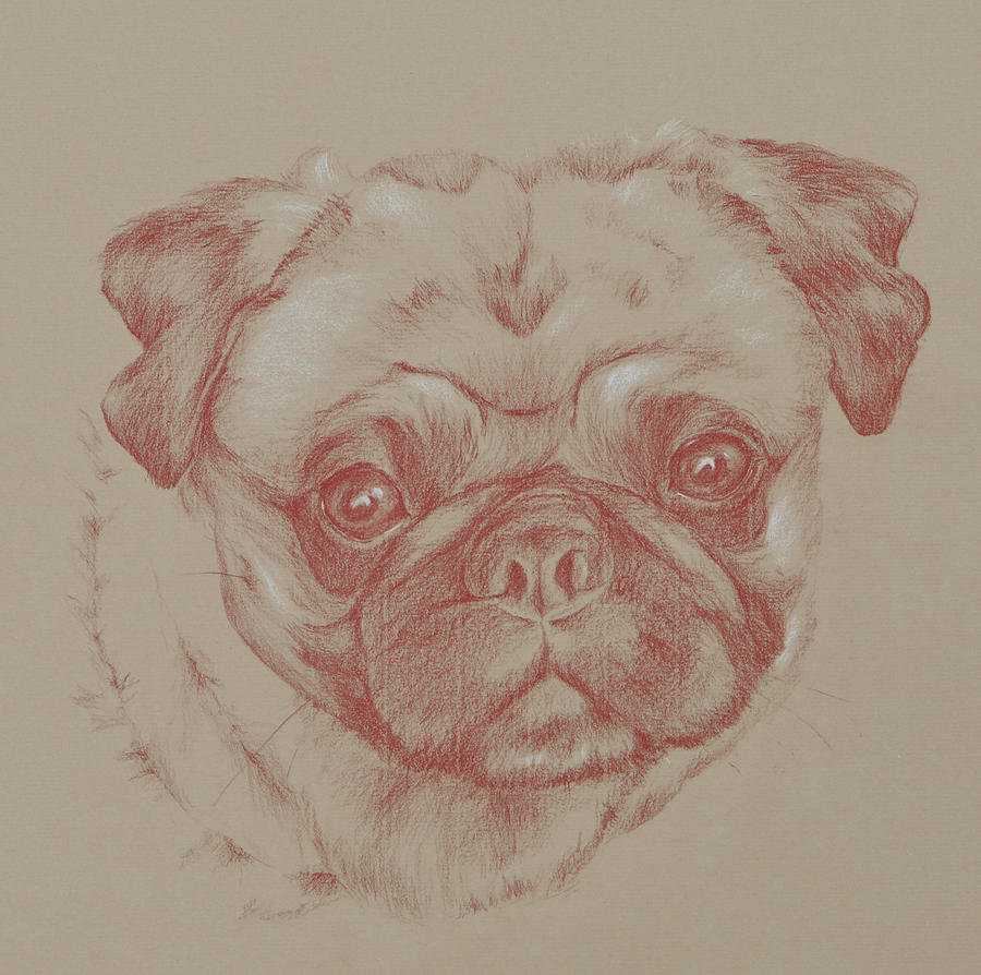 Pug Drawing - Pug Square by Wendy Booth