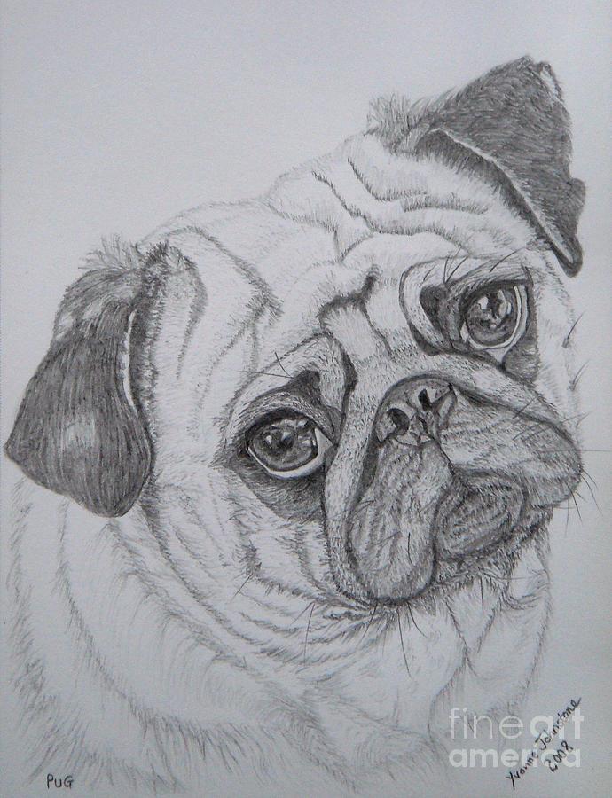 Pug Drawing - Pug by Yvonne Johnstone