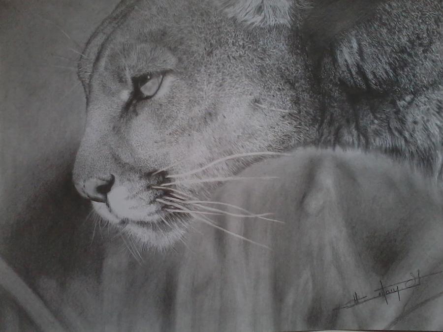 2b Drawing - Puma by Antony Joseph