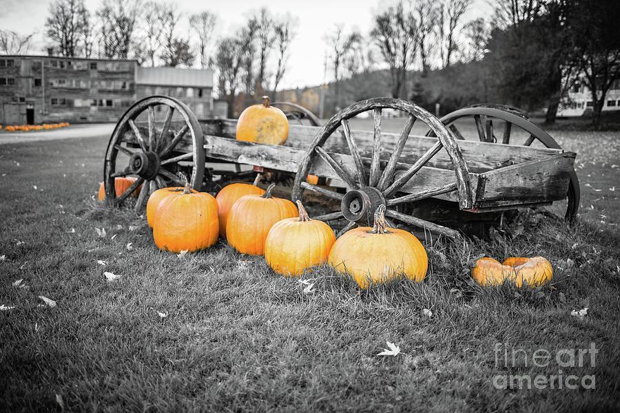 Stowe Photograph - Pumpkin Harvest Stowe Vermont by Edward Fielding