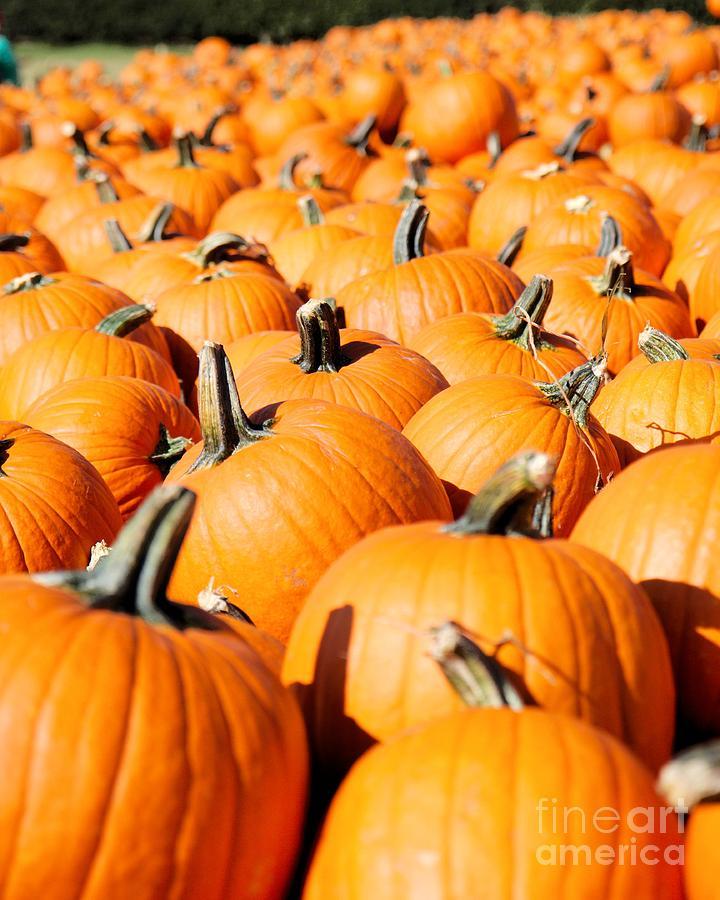Pumpkin Photograph - Pumpkin Patch by Caroline  Jeanine