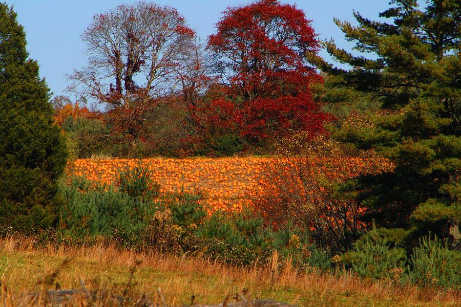 Pumpkins Photograph - Pumpkin Patch by Kathryn Meyer