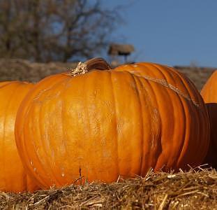 Pumpkin Photograph - Pumpkin by Peggy Biggs