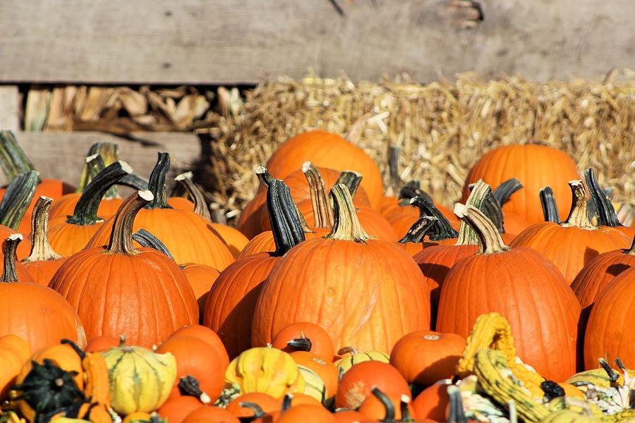 Pumpkin Perfection Photograph