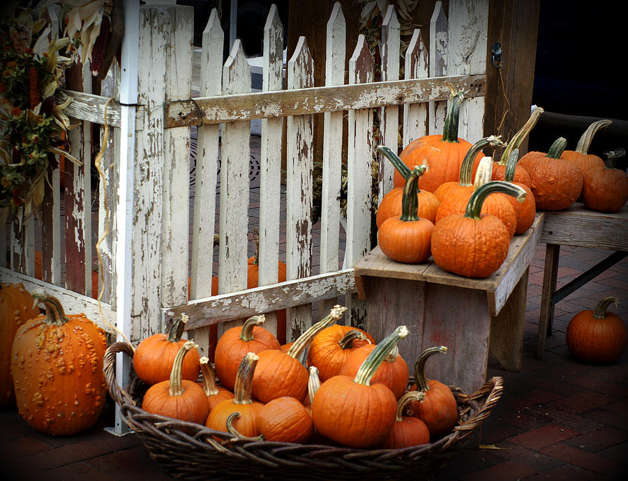 Pumpkin Pleasures Photograph