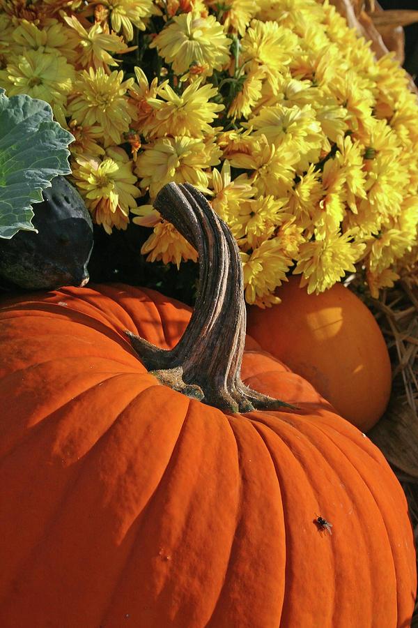 Nature Photograph - Pumpkin Still Life  by Sharon Mayhak