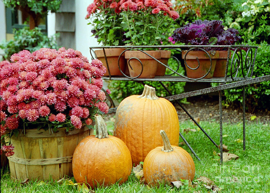 Maine Photograph - Pumpkins And Flowers by Linda Drown