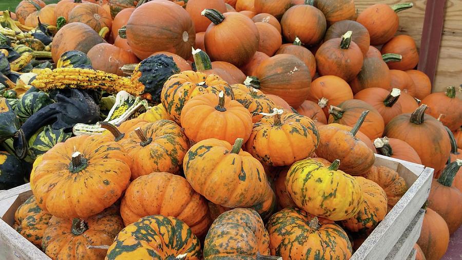 Decoration Photograph - Pumpkins For Sale by Liza Eckardt