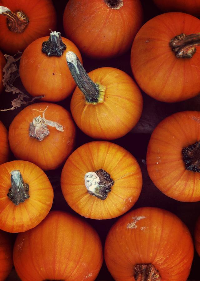 Fall Photograph - Pumpkins by JAMART Photography