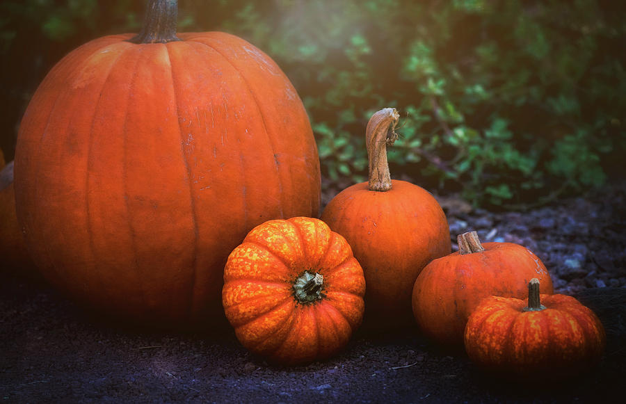 Pumpkins Photograph - Pumpkins  by Saija Lehtonen