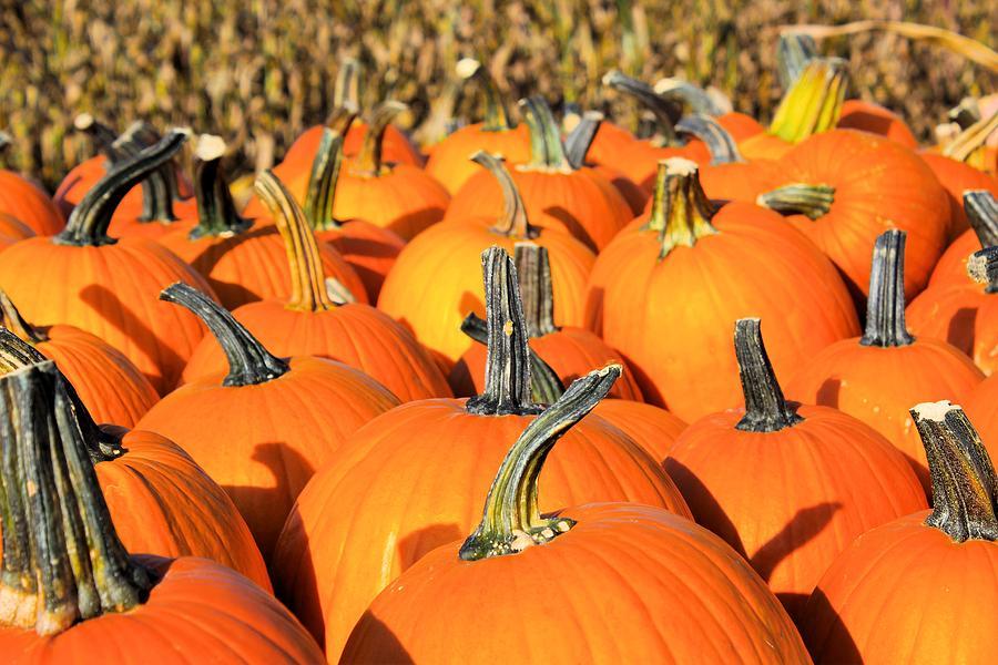 Pumpkins Photograph