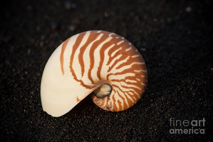 Punaluu Beach 3 by Daniel Knighton