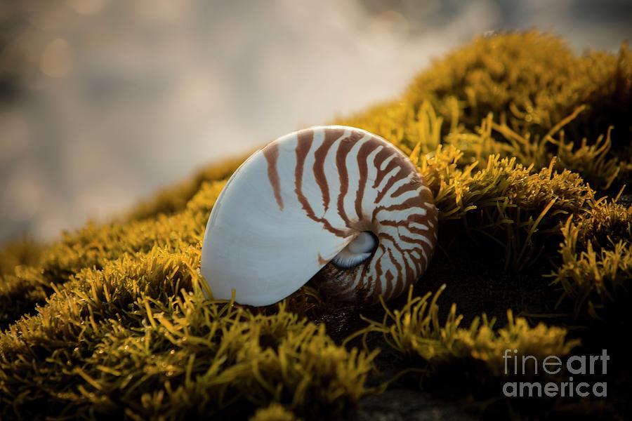 Punaluu Beach 4 by Daniel Knighton