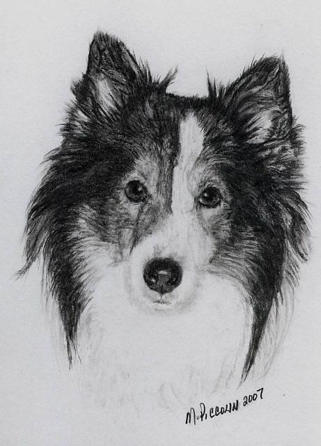 Dogs Drawing - Punch by Marlene Piccolin