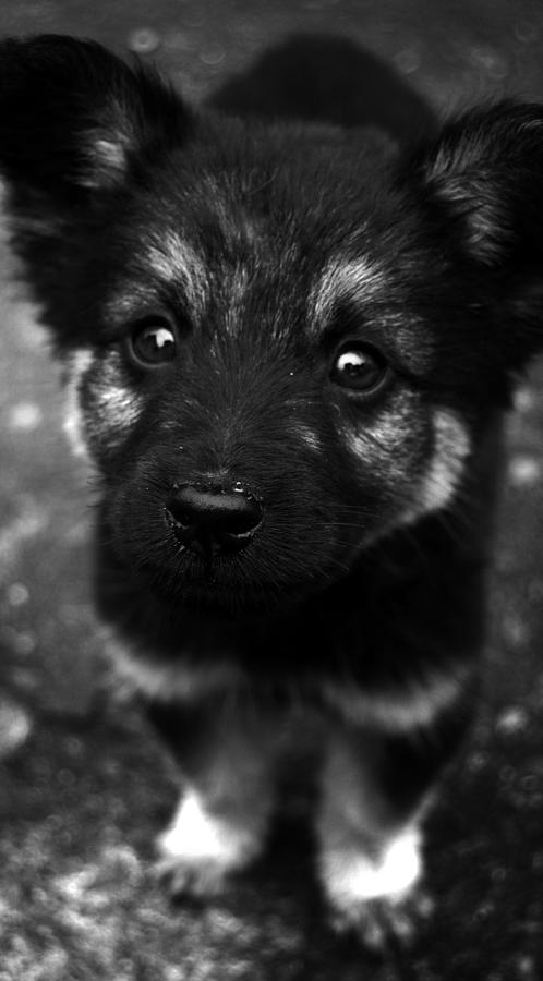 Puppy Photograph - Pup by Christopher Lugenbeal