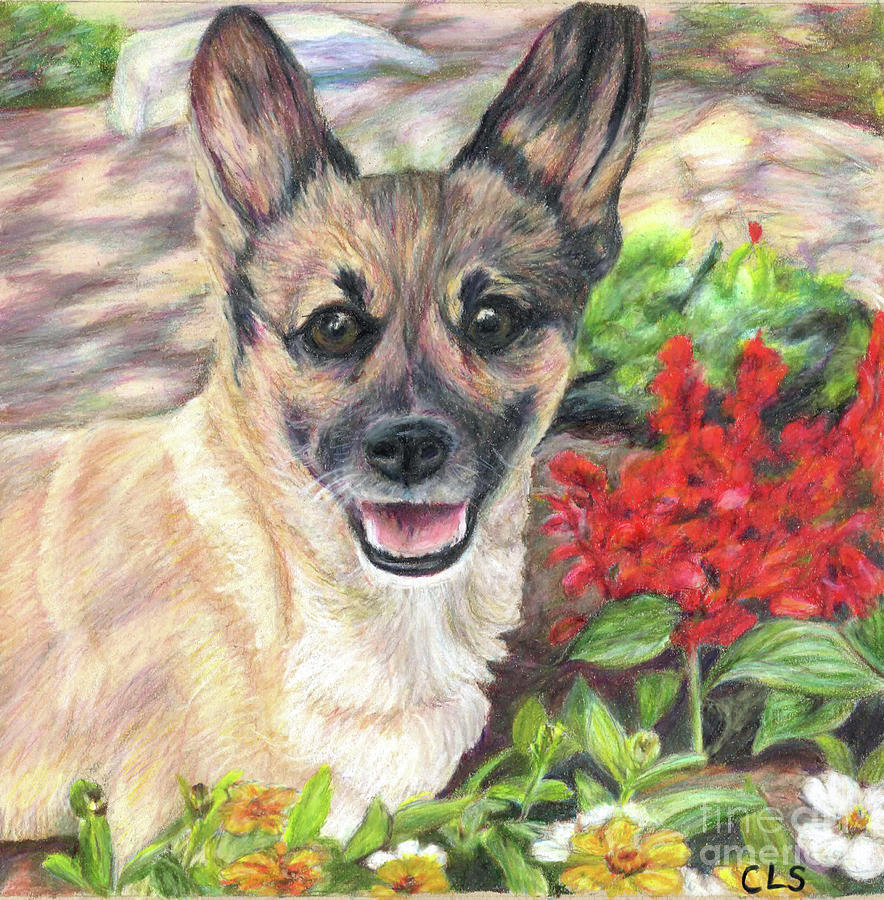 Pup Drawing - Pup In The Garden by C L Swanner