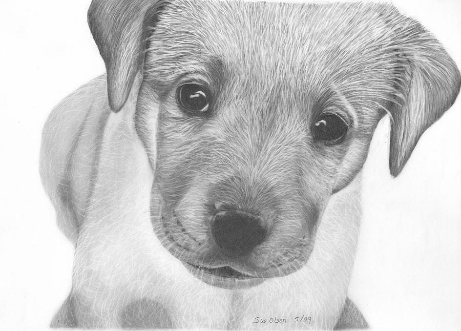Dog Drawing - Pup by Sue Olson