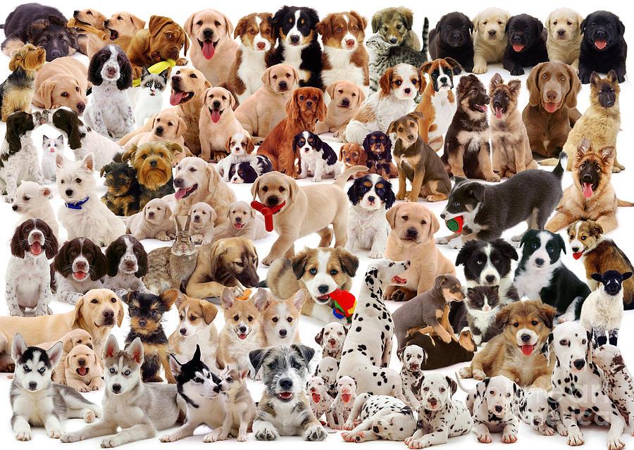 сколько собак на картинке непослушании хозяин может