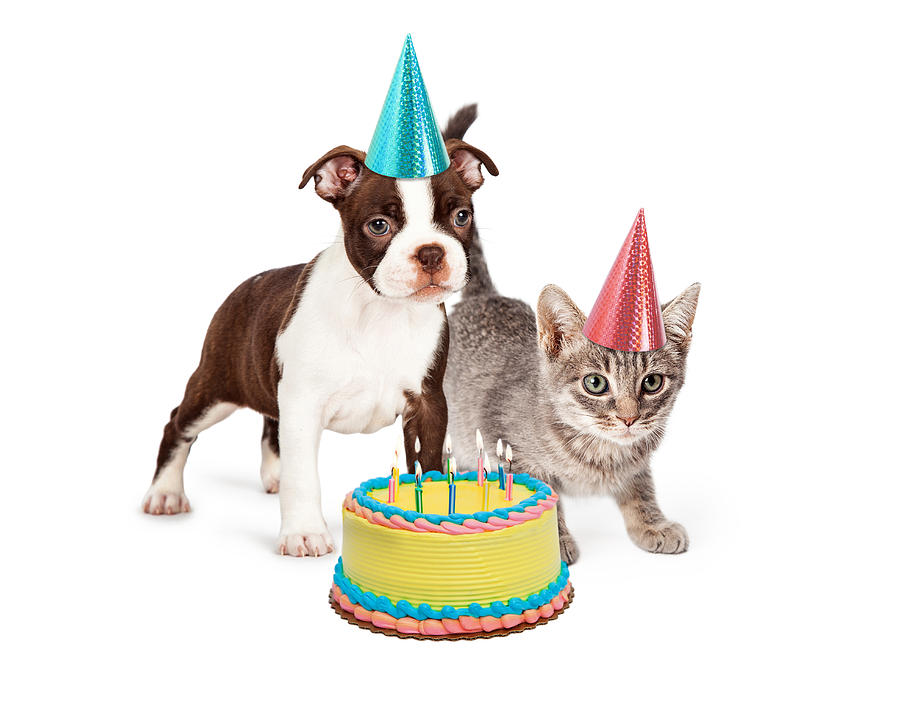 Puppy And Kitten With Birthday Cake Photograph By Susan Schmitz