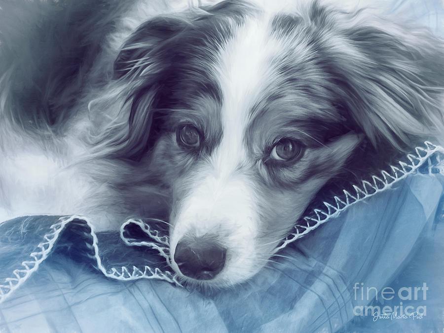 Digital Photograph - Puppy Dog Eyes by Jutta Maria Pusl