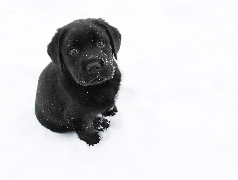 Dog Photograph - Puppy In The Snow by Larry Marshall