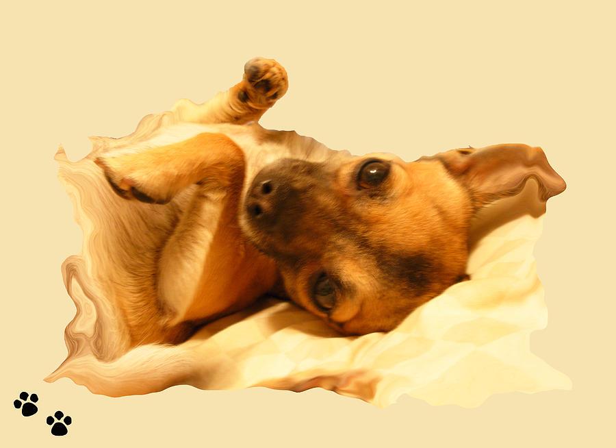 Dogs Photograph - Puppy Love by Amanda Vouglas