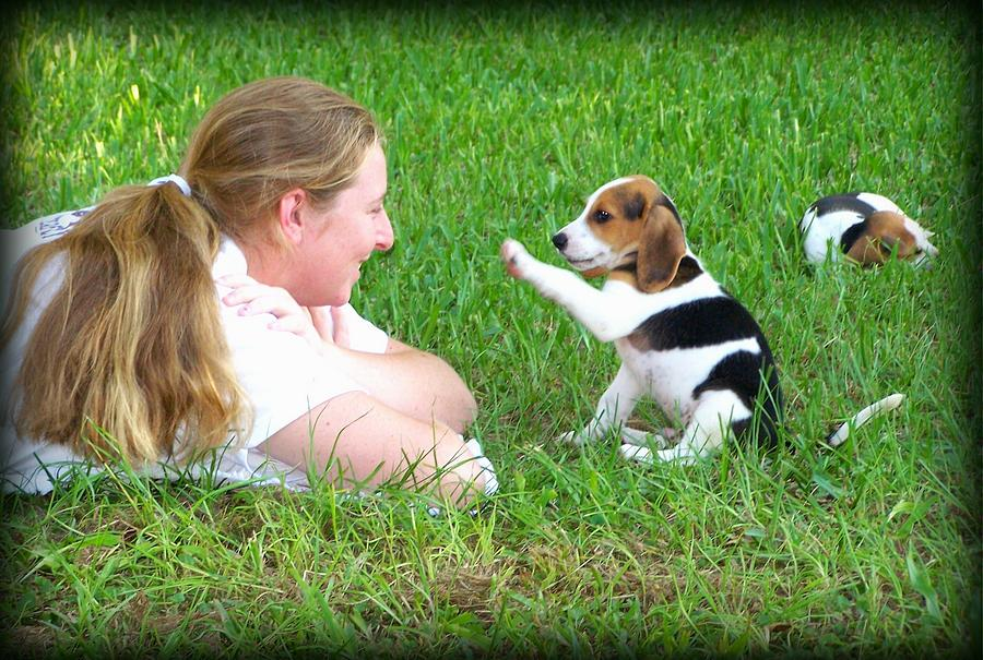 Beagle Photograph - Puppy Love by Lynn Griffin